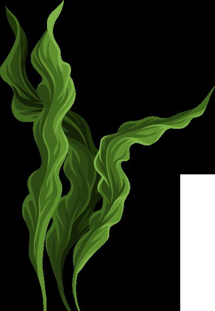 Algae Spirulina - Parry Nutraceuticals