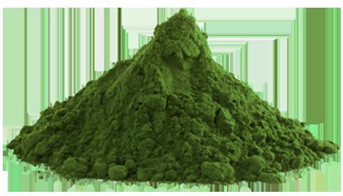 Chlorella Powder - Parry Nutraceuticals